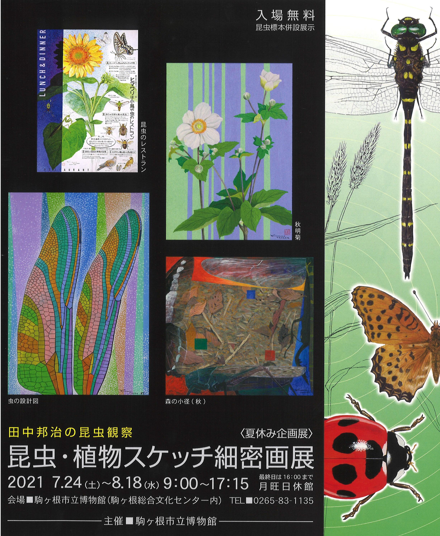 写真:夏休み企画展 田中邦治の昆虫観察「昆虫・植物スケッチ細密画展」
